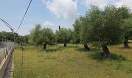 Γή 4085 m² στην Κέρκυρα
