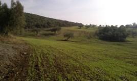 Terrain 45000 m² à Sithonia (Chalcidique)