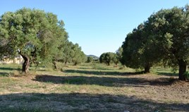 Zemljište 7800 m² na Kasandri (Halkidiki)