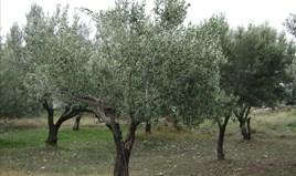 Działka 1500 m² na Peloponezie