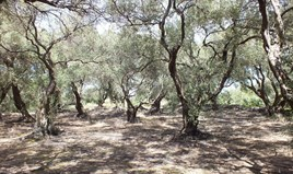 Arsa 7000 m² Korfu'da