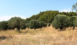 Zemljište 5000 m² na Kasandri (Halkidiki)