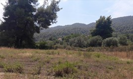Zemljište 6013 m² na Sitoniji (Halkidiki)