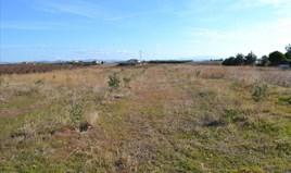 Zemljište 10000 m² na Kasandri (Halkidiki)