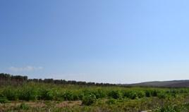 Działka 5100 m² na Kassandrze (Chalkidiki)