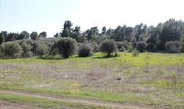 Zemljište 10000 m² na Sitoniji (Halkidiki)