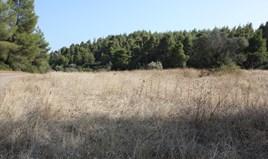 Земельна ділянка 4960 m² на Сітонії (Халкідіки)