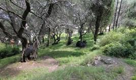 Land 4200 m² auf Korfu