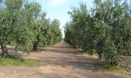 Zemljište 12375 m² na Halkidikiju