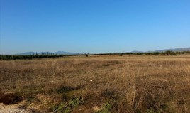 Zemljište 16600 m² na Sitoniji (Halkidiki)