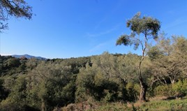 Γή 7500 m² στην Κέρκυρα