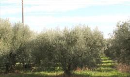 Земельный участок 50000 m² на Ситонии (Халкидики)