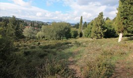 Zemljište 6000 m² na Krfu