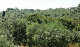 أرض 5650 m² في كورفو
