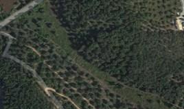 أرض 8000 m² في كورفو