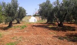 Terrain 6400 m² à Sithonia (Chalcidique)