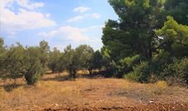 Zemljište 15120 m² na Sitoniji (Halkidiki)