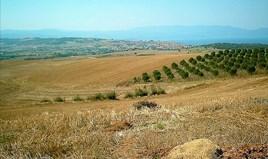 地皮 11200 m² 位于阿索斯山(哈尔基季基州)