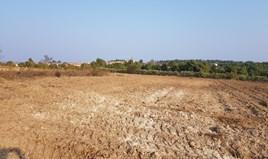 Zemljište 11005 m² na Kasandri (Halkidiki)