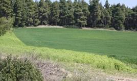 Земельный участок 17500 m² на Кассандре (Халкидики)