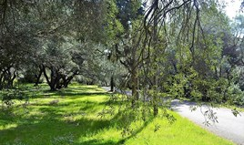 Land 4000 m² in Corfu