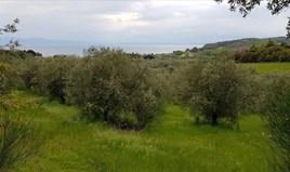 Działka 6500 m² na Athos (Chalkidiki)