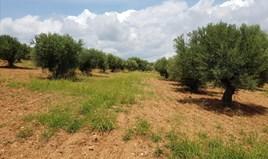 Land 5078 m² in Sithonia, Chalkidiki