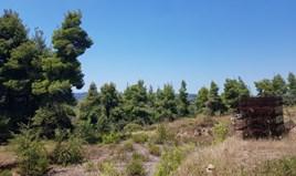 Земельный участок 11000 m² на Кассандре (Халкидики)