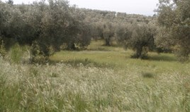 Zemljište 3150 m² na Sitoniji (Halkidiki)