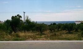 Земельна ділянка 5658 m² на Сітонії (Халкідіки)
