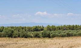 Zemljište 30000 m² na Kasandri (Halkidiki)