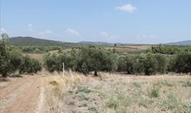 Land 6915 m² auf Sithonia (Chalkidiki)