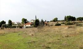 Land 10000 m² on the Euboea island