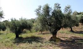 Land 2500 m² auf Sithonia (Chalkidiki)