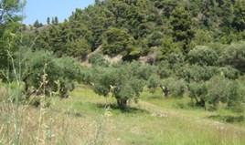 Land 16000 m² auf Kassandra (Chalkidiki)