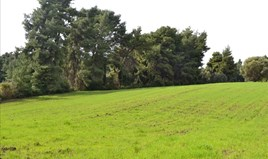 Zemljište 6750 m² na Kasandri (Halkidiki)