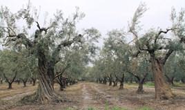 Zemljište 5538 m² na Sitoniji (Halkidiki)