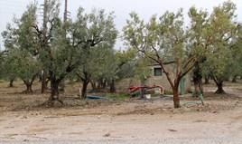 Zemljište 5500 m² na Sitoniji (Halkidiki)