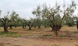 Zemljište 12500 m² na Sitoniji (Halkidiki)